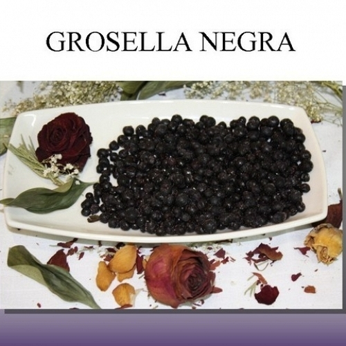 Grosella Negra Ultracongelada