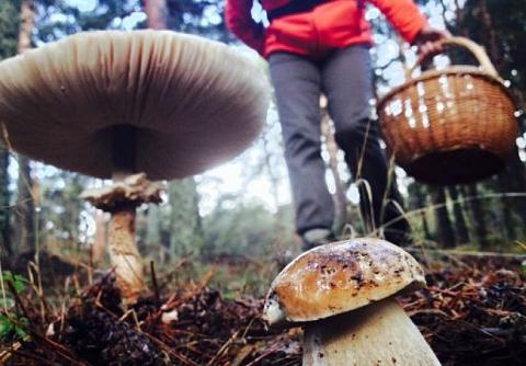 Approved the regulation regulating the wild mycology by the Junta de Castilla y León