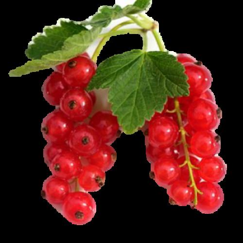 Grosella Roja Fresca