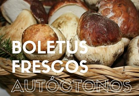Fresh Mushrooms Boletus