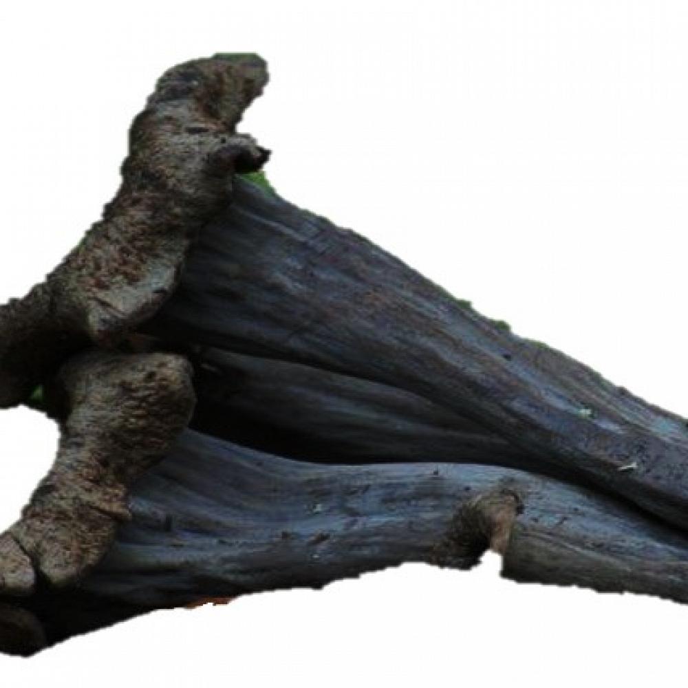 Trompeta Negra Fresca