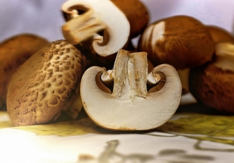 Mycology as an excuse to visualize the valuable resources of Tábara and Aliste