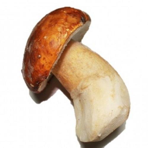 Boletus Pinicola Extra Gr Ultracongelado