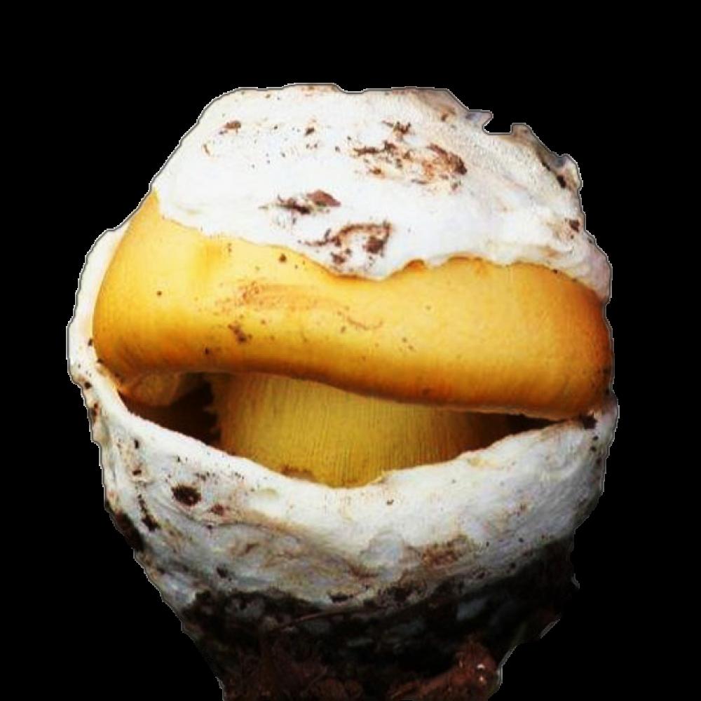 Huevo de Rey Iª Extra Fresco