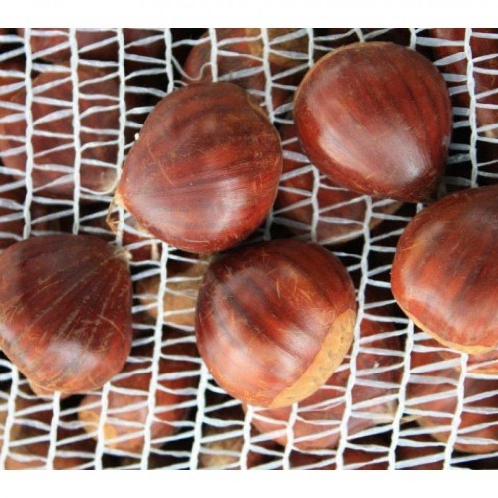 Fresh Extra Chestnut