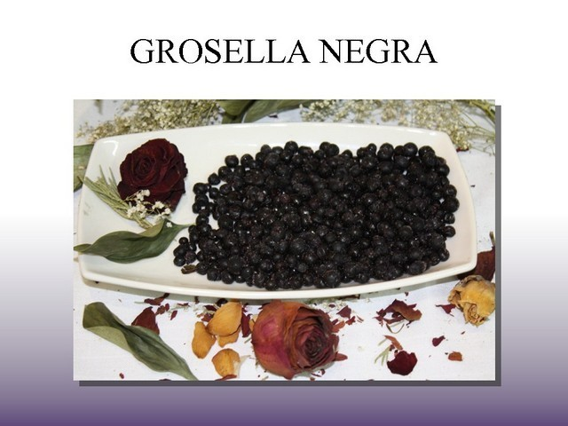 Grosella Negra Ultracongelada